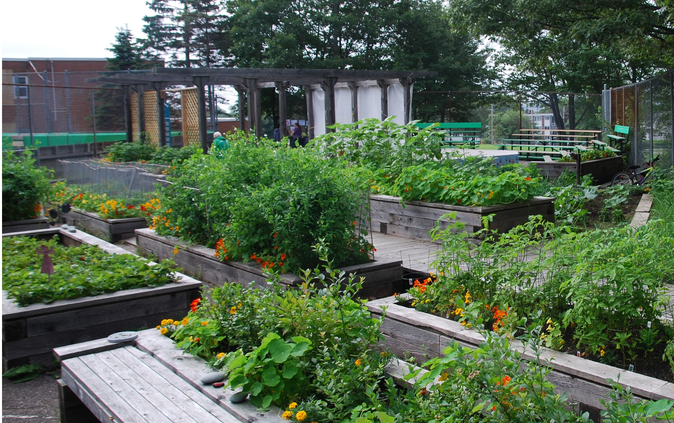 The Take Action Society community garden in Dartmouth North