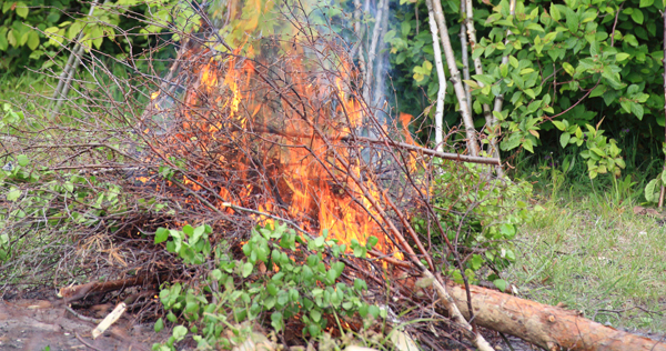 A pile of brush on fire
