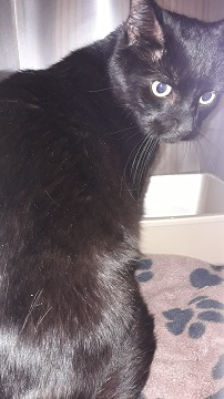 Black male domestic medium hair, found Unity Crt, Middle Sackville November 12 Case 320696