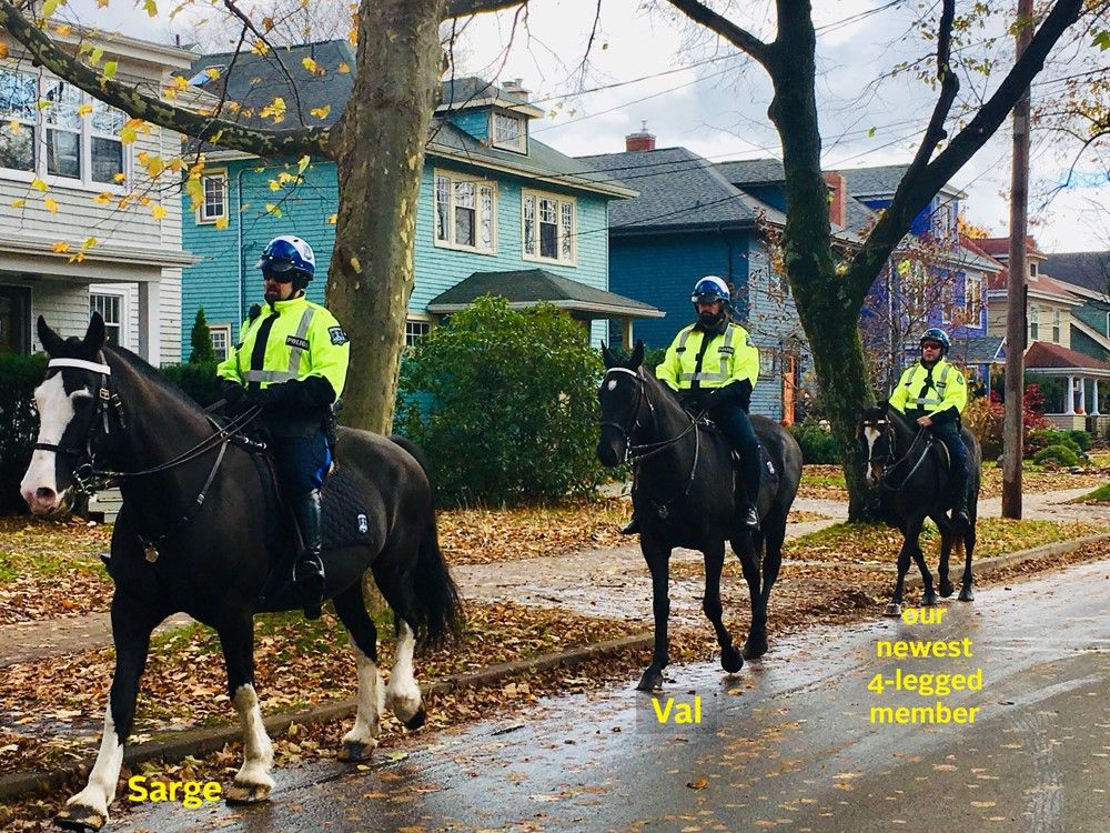 A picture of the three Mounted United horses: Sarge, Val and the newest 4-legged member