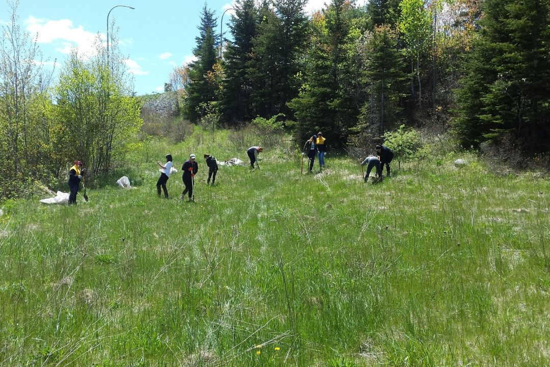 Municipal staff working in naturalized park area