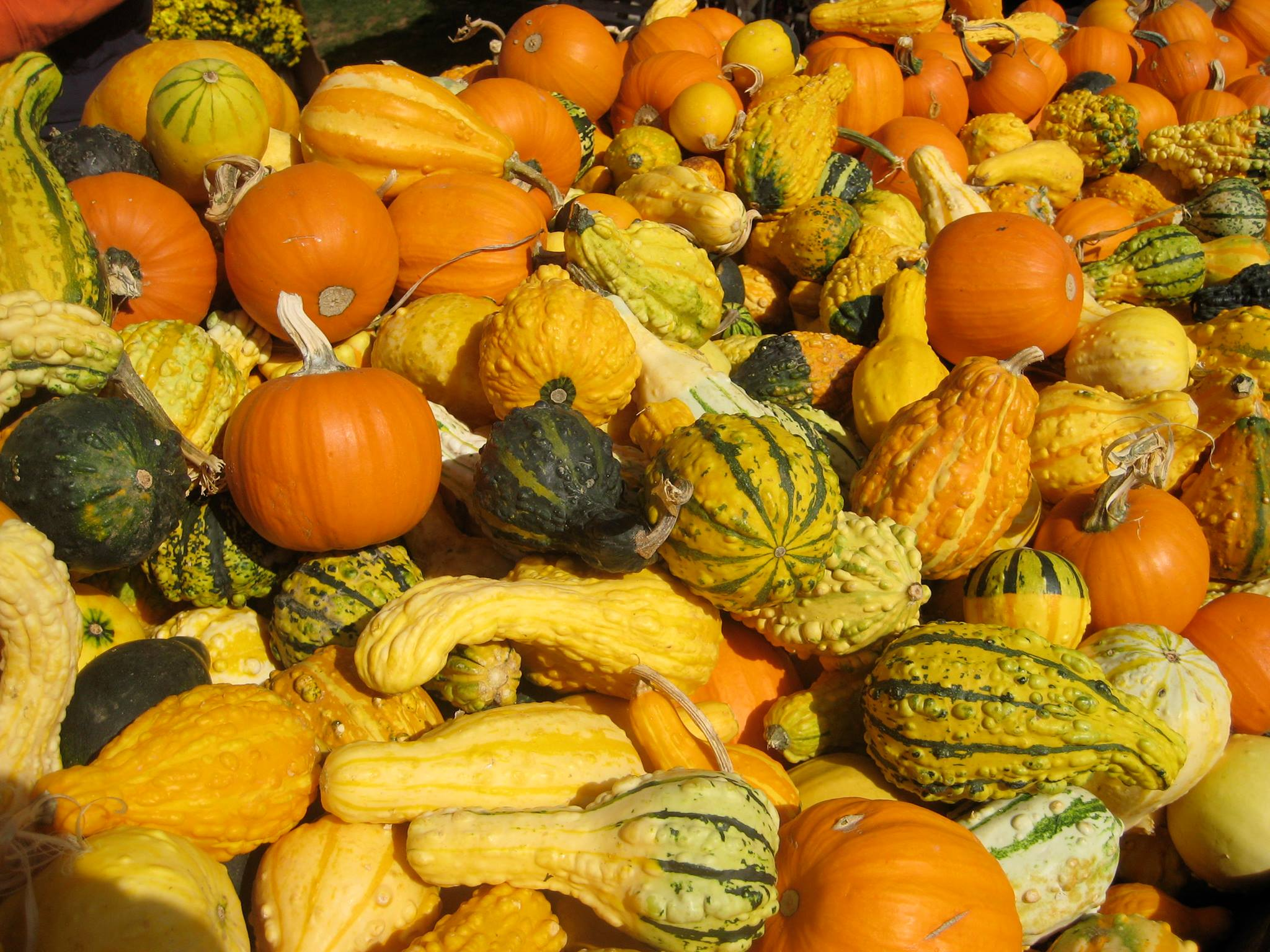 Colourful gourds
