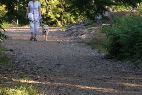 Lady walking her dog on a trail in Point Pleasant Park