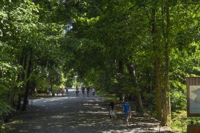 Walkers enjoy a shady trail in Point Pleasant Park