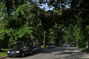 A tree-lined street in Halifax in the summer