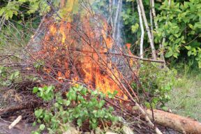 Close up photgraph of a medium size brush pile burning on a sunny day