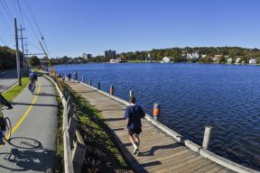 two cyclists bike along Lake Banook alongside a person that is jogging.
