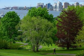 The Halifax Skyline is seen from the Dartmouth Commons while a person walks up a footpath